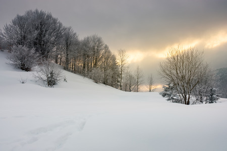 gorgeous winter sunrise in mountains. trees in hoarfrost on a snow covered hill. glowing overcast sky above the distant ridge Stock Photo