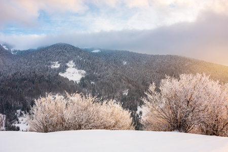 gorgeous winter sunrise in mountains. glowing hoarfrost on trees in morning light. exquisite nature scenery Stock Photo