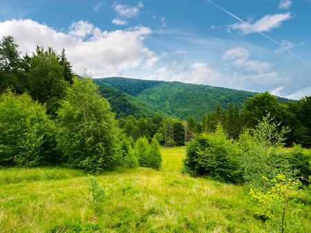 forested area in mountains. calm nature with green grassy meadow and cloudy sky Stock Photo - 113582528