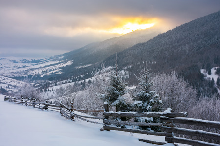 wonderful snowy countryside in mountains. spruce trees and wooden fence on the edge of a slope. winter sun rise behind the ridge and cloudy sky