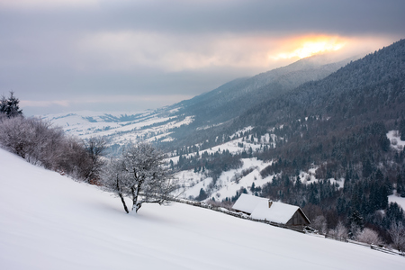 wonderful snowy countryside in mountains. tree and woodshed on a snowy slope. winter sun rise behind the ridge and cloudy sky