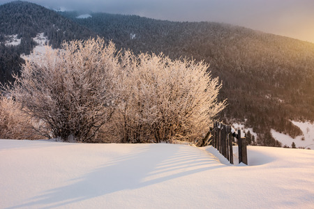 countryside glowing frost of winter sunrise. trees in hoarfrost near the wooden fence on a snowy meadow on the edge of a hill. forested mountain distant in clouds.