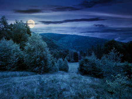 forested area in mountains at night in full moon light. calm nature with green grassy meadow and cloudy sky Stock Photo