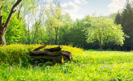 bunch of logs on a grassy meadow forest. beautiful sunny weather in springtime