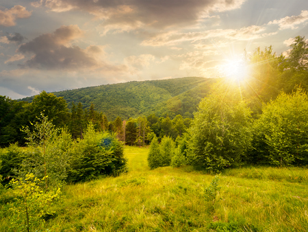 forested area in mountains at sunset in evening light. calm nature with green grassy meadow and cloudy sky