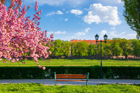 bench on the embankment near the lantern and sakura tree in blossom. wonderful springtime scenery of Uzhgorod town Stock Photo