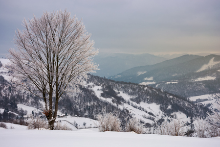 lovely winter scenery with tree in hoarfrost. gloomy and overcast weather Stock Photo