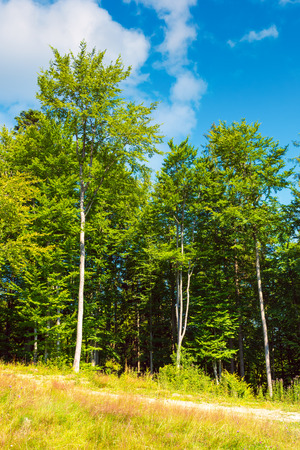 margin of the beech forest. lovely nature scenery in summertime Stock Photo