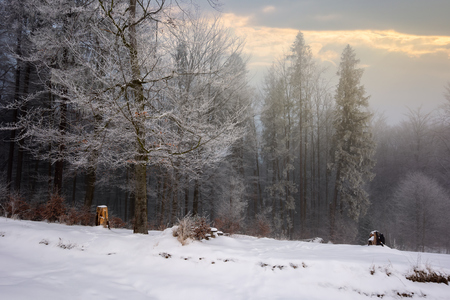 forest in hoarfrost. beautiful winter scenery. foggy sunrise Stock Photo