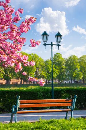 bench on the embankment near the lantern and sakura tree in blossom. wonderful springtime scenery of Uzhgorod town Stock Photo