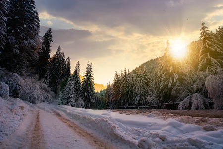 road in snow through winter forest at sunset. beautiful scenery in mountains. spruce trees in snow