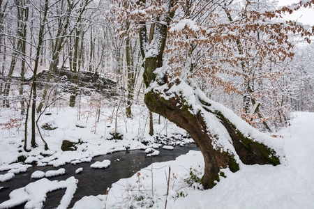 tree by the creek in winter forest. weathered foliage along the snow covered shore. beautiful nature scenery