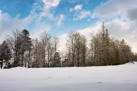 trees on a snowy hill. lovely nature scenery with beautiful sky in winter Stock Photo