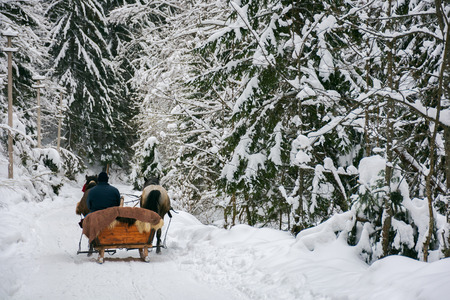 winter ride in horse sleigh. deep snow in ancient forest