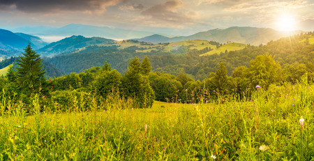 panorama of a beautiful grassy meadow in mountains at sunset in evening light. spruce forest on a hillside. rolling hills fall down in to the foggy valley in the distance. wonderful summer landscape Stock Photo