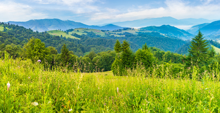 panorama of a beautiful grassy meadow in mountains at sunrise. spruce forest on a hillside. rolling hills fall down in to the foggy valley in the distance. wonderful summer landscape Stock Photo