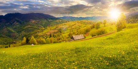 dandelions on rural field in mountains at sunset in evening light. beautiful springtime landscape. village in the distance valley.