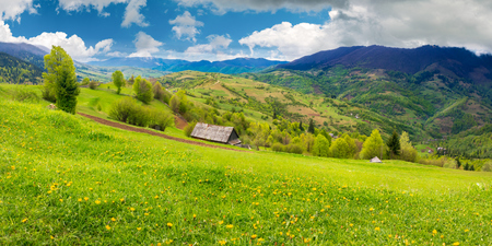 dandelions on rural field in mountains. beautiful springtime landscape. village in the distance valley.