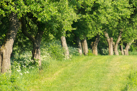 row of trees along the grassy meadow. beautiful summer scenery. natural background Stock Photo