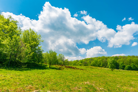 grassy meadow among beech forest. beautiful springtime scenery at high noon. huge fluffy cloud above. Stock Photo