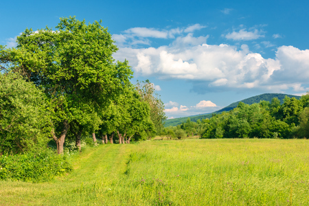 beautiful countryside in springtime. grassy field among wild apple trees. mountain in the distance. fluffy clouds on a blue sky. warm afternoon.