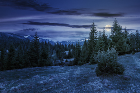 beautiful springtime landscape in mountains at night in full moon light. spruce forest on grassy hillside meadow. spots of snow on distant ridge. Stock Photo