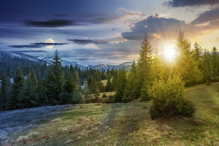 day and night time change concept of beautiful springtime landscape with sun and moon. spruce forest on grassy hillside meadow. spots of snow on distant ridge.