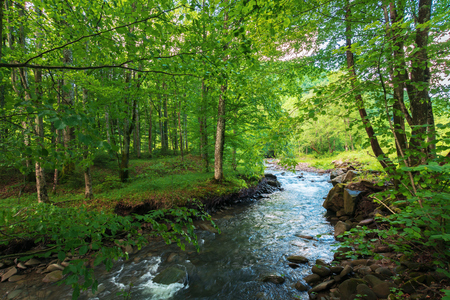 beautiful scenery of mountain river running through green beech forest in springtime. sunny weather. wonderful nature background.