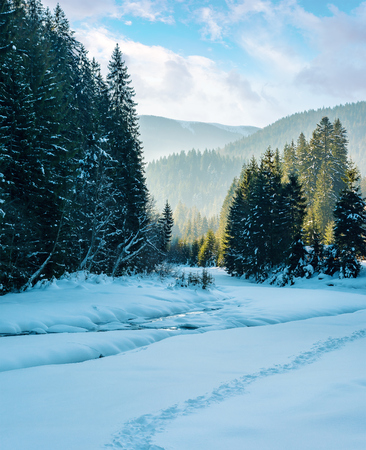 winter landscape with river in mountains. beautiful nature scenery with snow covered riverbank among spruce forest