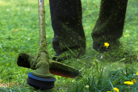 crazy grass cutting in the park with gasoline trimmer. head with nylon line cutting grass and dandelions in to small pieces. flying plant lumps. beautiful gardening background Stock Photo