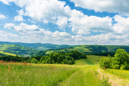path through beautiful summer countryside. grassy meadow among the forest. trees along the road. wonderful nature scenery of Carpathian Stock Photo