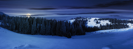 panorama of a beautiful winter landscape at night in full moon light. spruce forest on a snow covered hills. part of trees in the shade. wonderful nature scenery in mountains