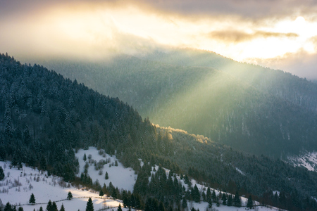 dramatic sunrise in mountains. beautiful winter scenery. beam of light through cloudy sky. spruce forest in hoarfrost on the hill