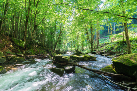 rapid stream among the rocks in the forest. beautiful nature scenery in springtime. green foliage on trees and moss on boulders. trunk above the flow on the stone