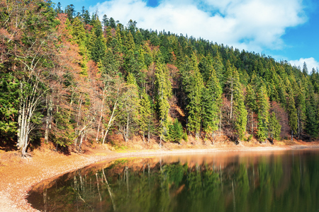 shore of the lake among coniferous forest with some beech trees in autumn. beautiful nature scenery in high noon. some clouds on a blue sky. colorful fallen foliage