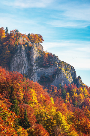 rocky cliff in autumn. trees in colorful foliage. warm and sunny weather. beautiful nature background with blue sky