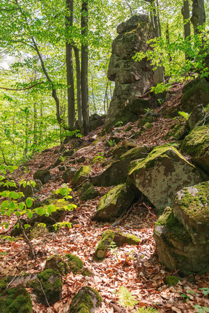 huge mossy cliff in the forest. beautiful nature scenery in spring. wild beech forest Stock Photo - 116824847