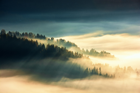 forest island on the hill in the sea of fog. view from the top. gorgeous scenery at sunrise. wonderful nature background