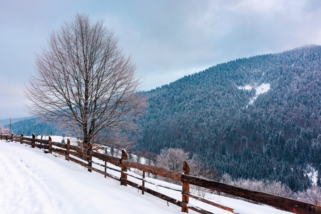 beautiful winter countryside in mountains. wooden fence and tree along the snowy slope. cold blue morning weather