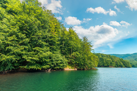 scenic view of beech forest on lake shore. sunny afternoon summer weather with fluffy clouds on the sky. beautiful nature background Stock Photo