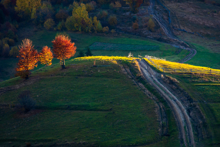beautiful autumn countryside in mountains. wooden fence along the road uphill. drop of light on red trees at sunrise. carpathian rural area. beautiful sunny weather Stock Photo