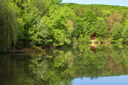 pond in the park. beautiful springtime scenery. beech forest on the shore reflecting in the water surface. sunny weather