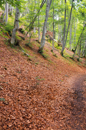 path in the forest on hill in fallen foliage. beautiful summer scenery