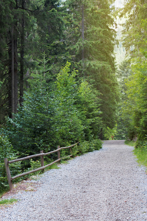 gravel path through coniferous forest in morning light.  wooden fence on the left side. tall trees. beautiful summer scenery