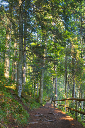 forest path in dappled light. wooden fence. low angle view. beautiful summer scenery Stock Photo - 117160151