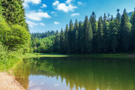 lake among spruce forest in mountains. trees reflecting in the water surface. wonderful summer scenery at sunny forenoon with fluffy clouds on a blue sky