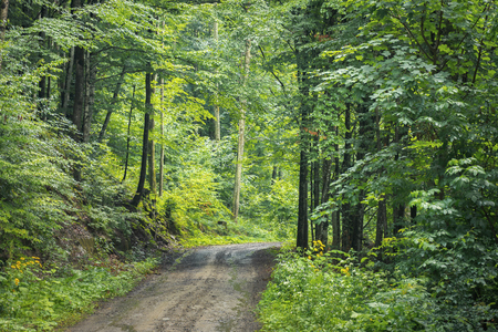 country road through forest. transportation background. summer nature scenery Stock Photo