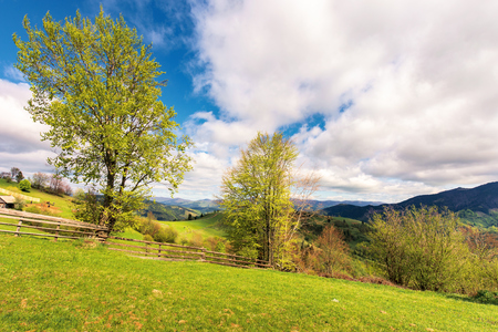 trees on the rural field in mountains. wooden fence along the grassy hillside. beautiful countryside scenery in springtime. wonderful sunny weather with cloudy sky