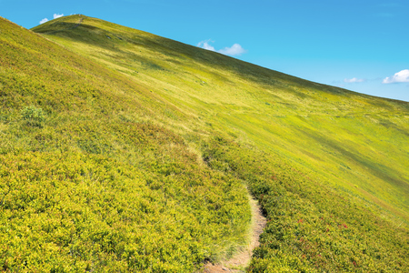 wonderful sunny scenery in mountains. grassy alpine meadow with foot path winding uphill. blue sky with fluffy clouds. beautiful carpathian landscape