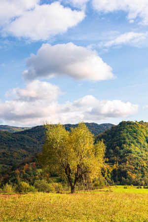 tree on the rural field in mountains. beautiful countryside scenery in early autumn. simple vertical composition. sunny evening with fluffy clouds on a blue sky Stock Photo - 117778333